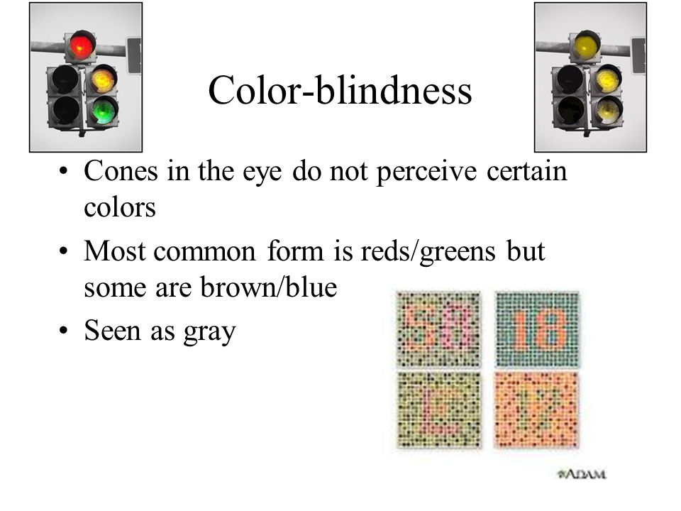 Color-blindness Cones in the eye do not perceive certain colors Most common form is reds/greens but some are brown/blue Seen as gray