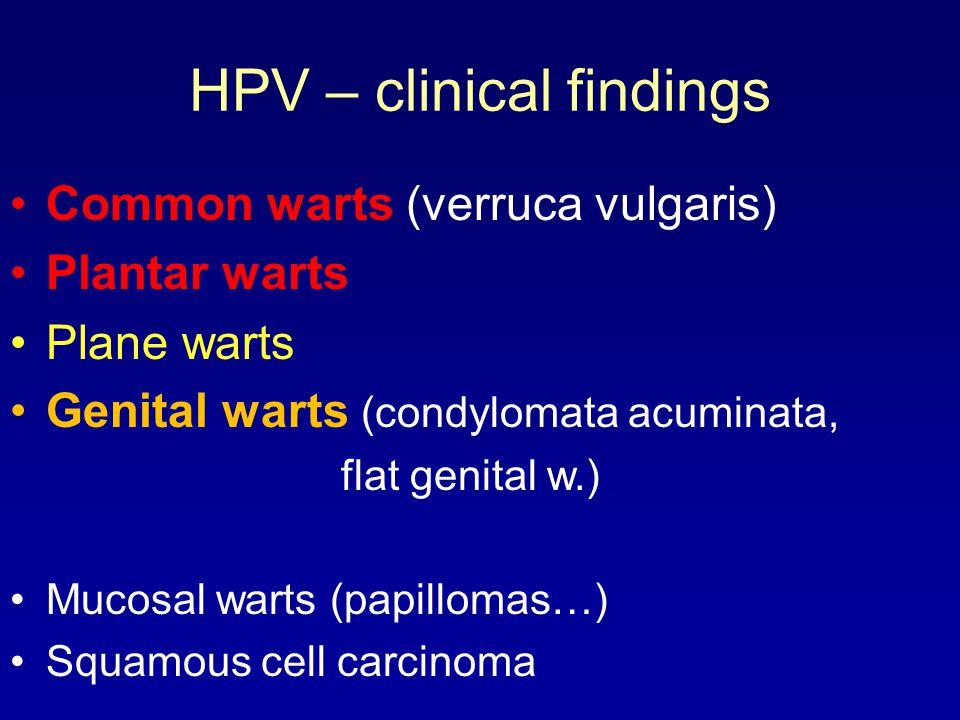 HPV – clinical findings Common warts (verruca vulgaris) Plantar warts Plane warts Genital warts (condylomata acuminata, flat genital w.) Mucosal warts