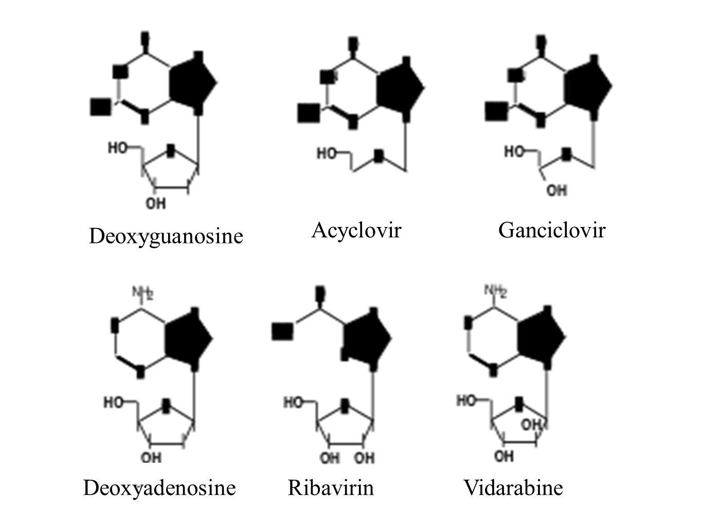 Deoxyguanosine AcyclovirGanciclovir RibavirinVidarabineDeoxyadenosine