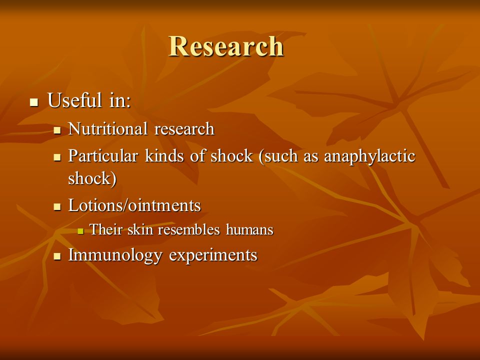 Research Useful in: Useful in: Nutritional research Nutritional research Particular kinds of shock (such as anaphylactic shock) Particular kinds of shock (such as anaphylactic shock) Lotions/ointments Lotions/ointments Their skin resembles humans Their skin resembles humans Immunology experiments Immunology experiments