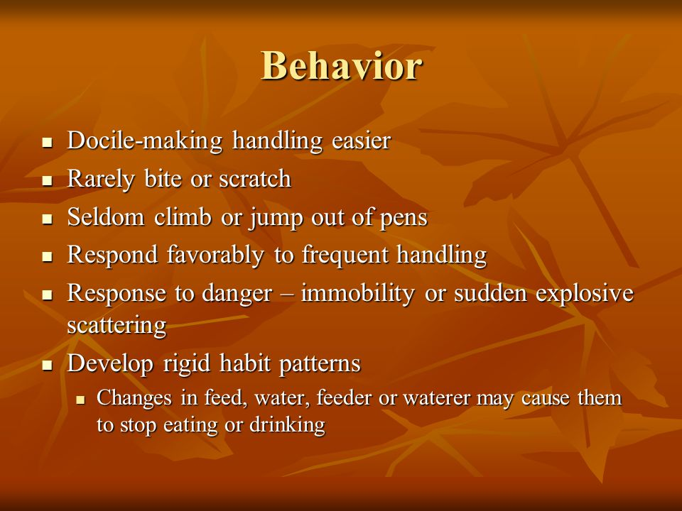 Behavior Docile-making handling easier Docile-making handling easier Rarely bite or scratch Rarely bite or scratch Seldom climb or jump out of pens Seldom climb or jump out of pens Respond favorably to frequent handling Respond favorably to frequent handling Response to danger – immobility or sudden explosive scattering Response to danger – immobility or sudden explosive scattering Develop rigid habit patterns Develop rigid habit patterns Changes in feed, water, feeder or waterer may cause them to stop eating or drinking Changes in feed, water, feeder or waterer may cause them to stop eating or drinking