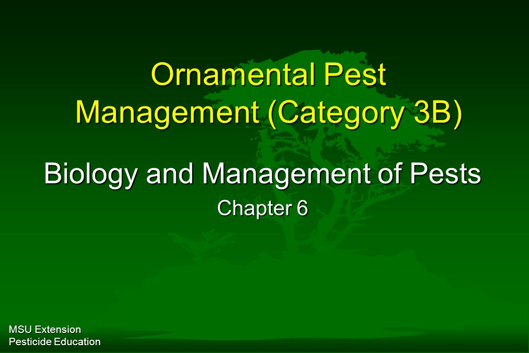 A stab in the dark approach to pest management is seldom effective.