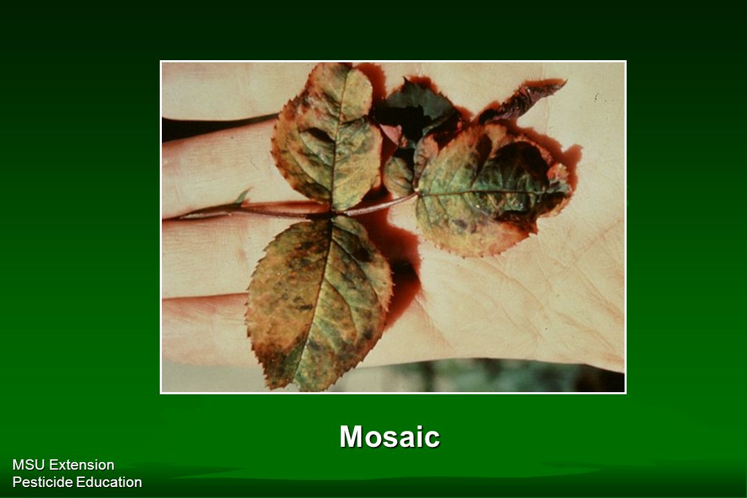MSU Extension Pesticide Education Mosaic