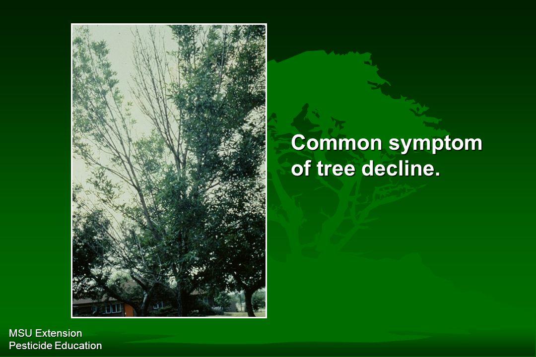 MSU Extension Pesticide Education Common symptom of tree decline.