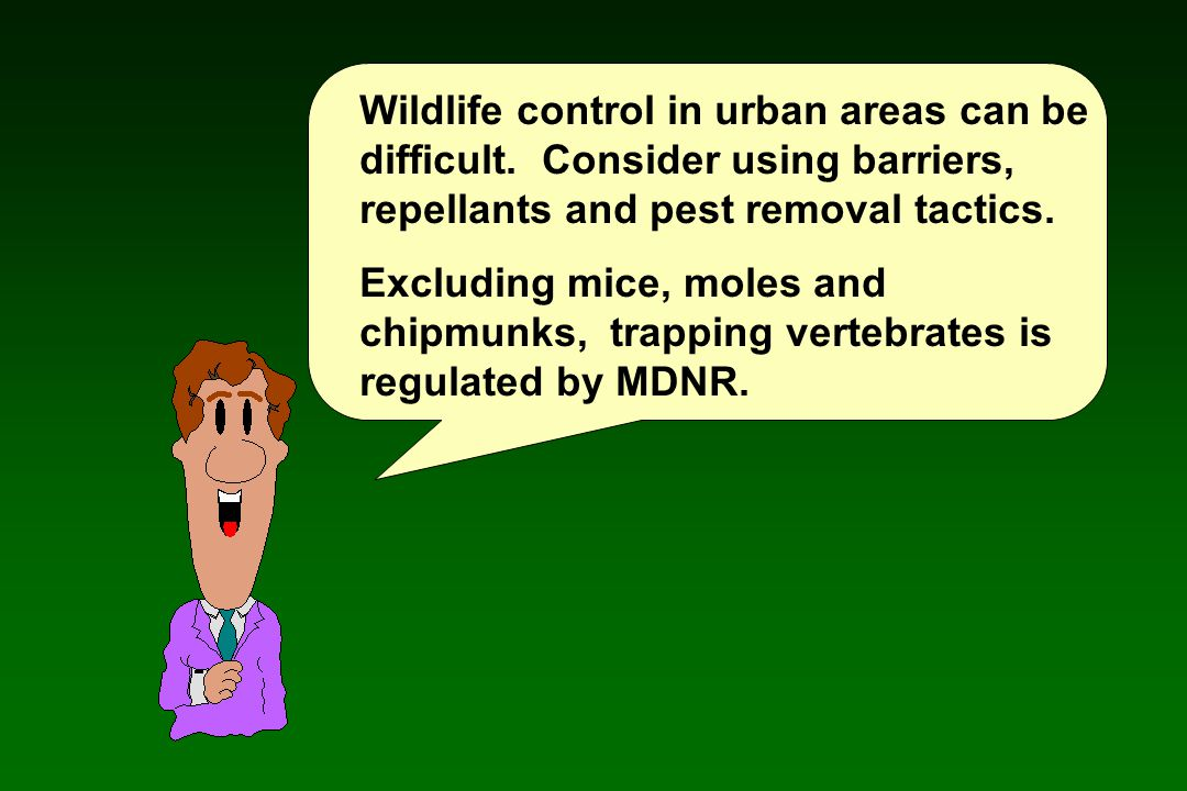 Wildlife control in urban areas can be difficult.