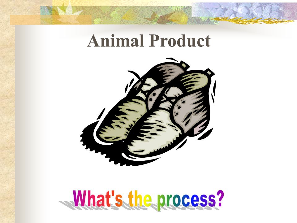 Animal Product