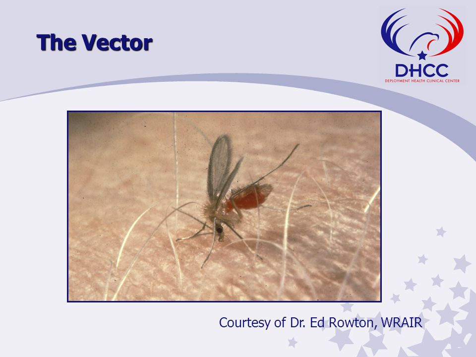 The Vector Courtesy of Dr. Ed Rowton, WRAIR