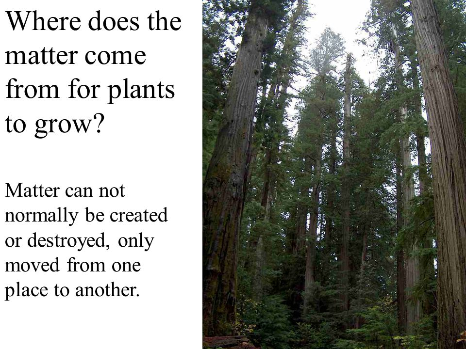 Where does the matter come from for plants to grow? Matter can not normally be created or destroyed, only moved from one place to another.