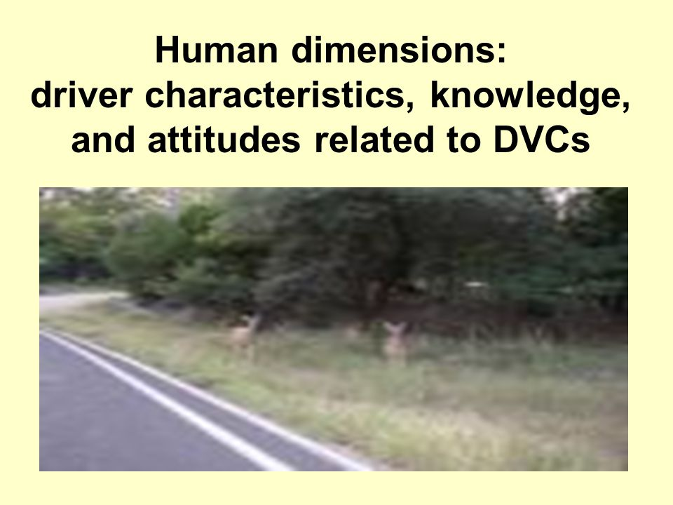 Human dimensions: driver characteristics, knowledge, and attitudes related to DVCs