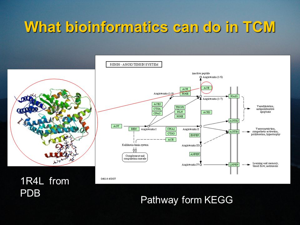 What bioinformatics can do in TCM 1R4L from PDB Pathway form KEGG