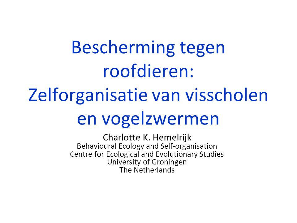 Bescherming tegen roofdieren: Zelforganisatie van visscholen en vogelzwermen Charlotte K. Hemelrijk Behavioural Ecology and Self-organisation Centre f