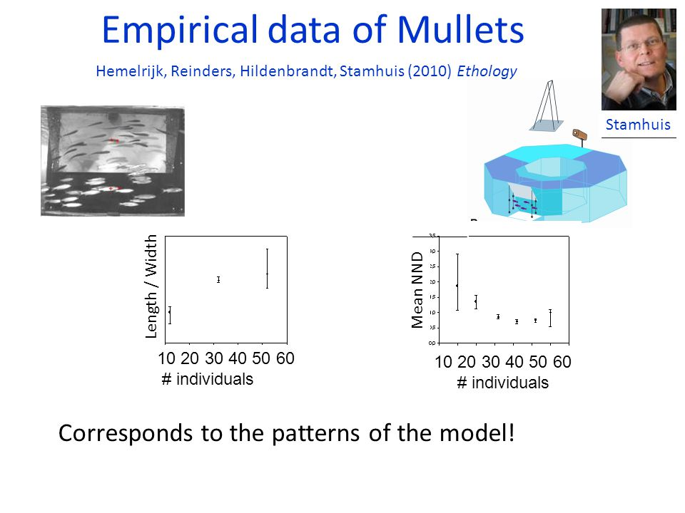 Empirical data of Mullets Corresponds to the patterns of the model.