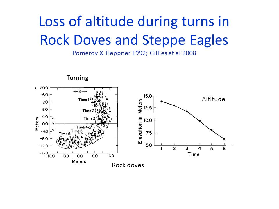Loss of altitude during turns in Rock Doves and Steppe Eagles Altitude Turning Pomeroy & Heppner 1992; Gillies et al 2008 Rock doves