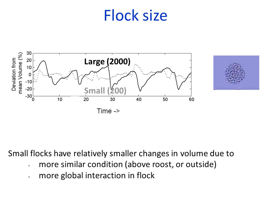 Flock size Small flocks have relatively smaller changes in volume due to more similar condition (above roost, or outside) more global interaction in flock Large (2000) Small (200) Time ->