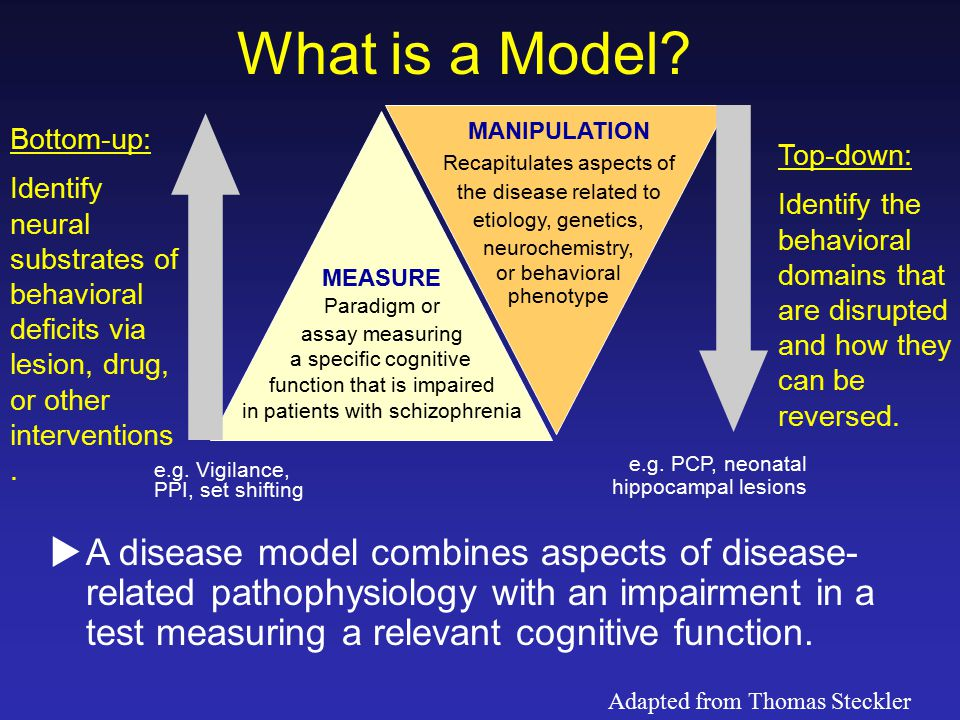 What is a Model? MEASURE Paradigm or assay measuring a specific cognitive function that is impaired in patients with schizophrenia MANIPULATION Recapi