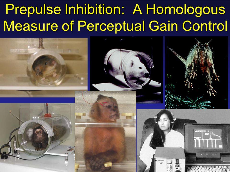 Prepulse Inhibition: A Homologous Measure of Perceptual Gain Control