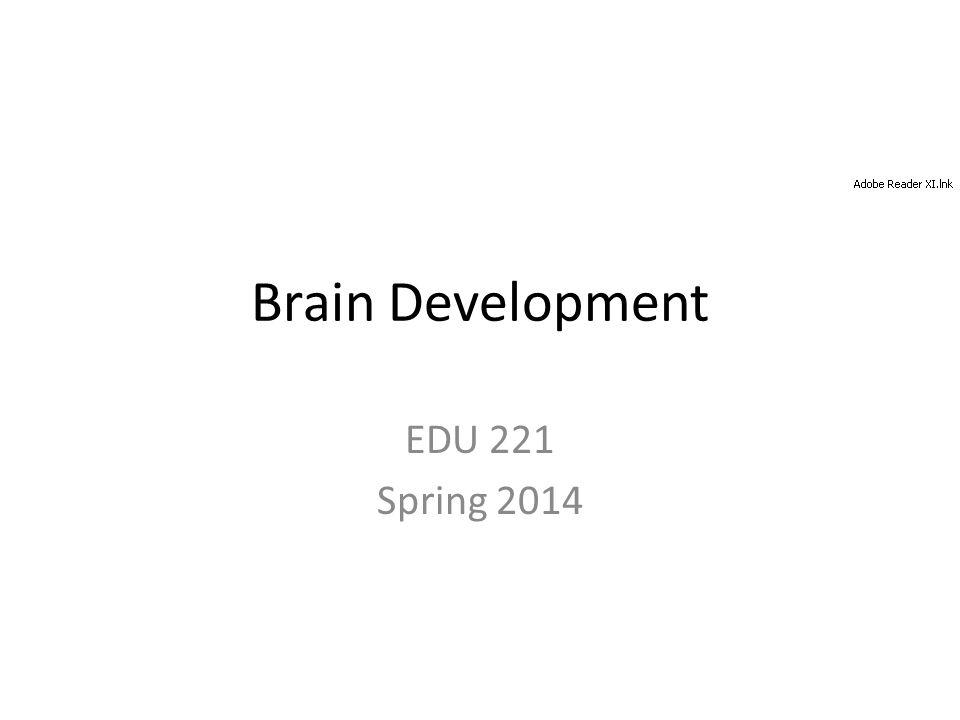 Brain Development EDU 221 Spring 2014