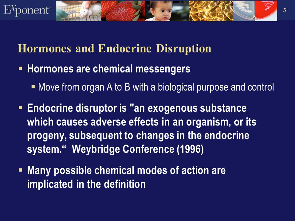 5 Hormones and Endocrine Disruption  Hormones are chemical messengers  Move from organ A to B with a biological purpose and control  Endocrine disruptor is an exogenous substance which causes adverse effects in an organism, or its progeny, subsequent to changes in the endocrine system. Weybridge Conference (1996)  Many possible chemical modes of action are implicated in the definition