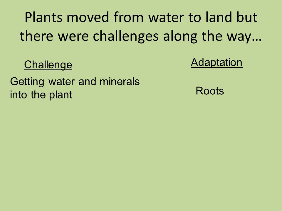 Plants moved from water to land but there were challenges along the way… Challenge Adaptation Getting water and minerals into the plant Roots