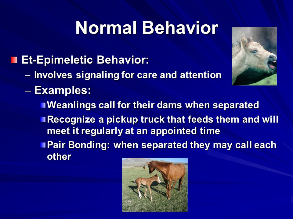 Normal Behavior Et-Epimeletic Behavior: –Involves signaling for care and attention –Examples: Weanlings call for their dams when separated Recognize a pickup truck that feeds them and will meet it regularly at an appointed time Pair Bonding: when separated they may call each other