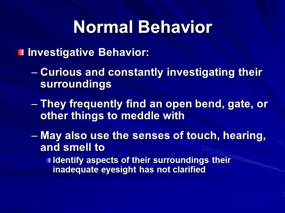 Normal Behavior Investigative Behavior: –Curious and constantly investigating their surroundings –They frequently find an open bend, gate, or other things to meddle with –May also use the senses of touch, hearing, and smell to Identify aspects of their surroundings their inadequate eyesight has not clarified