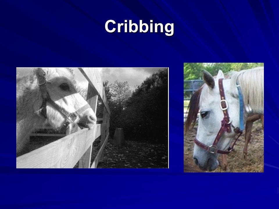 Cribbing