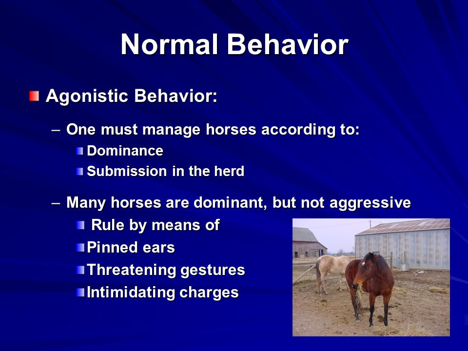 Normal Behavior Agonistic Behavior: –One must manage horses according to: Dominance Submission in the herd –Many horses are dominant, but not aggressive Rule by means of Rule by means of Pinned ears Threatening gestures Intimidating charges