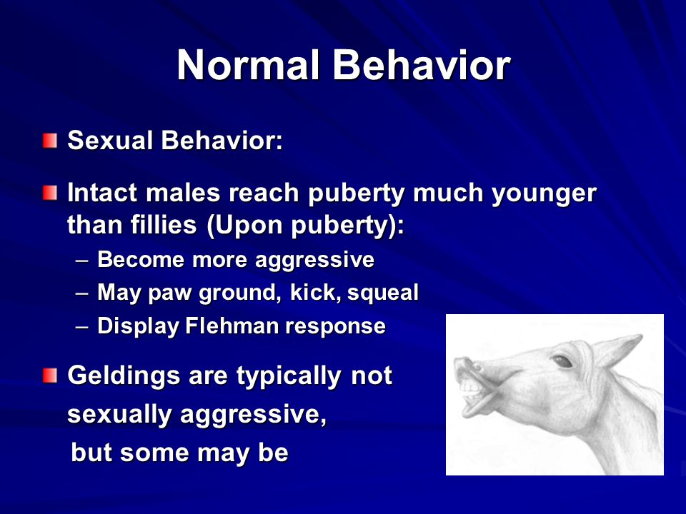 Normal Behavior Sexual Behavior: Intact males reach puberty much younger than fillies (Upon puberty): –Become more aggressive –May paw ground, kick, squeal –Display Flehman response Geldings are typically not sexually aggressive, but some may be but some may be