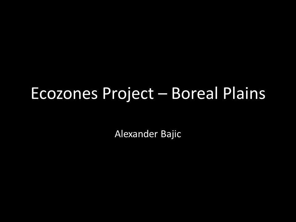 Ecozones Project – Boreal Plains Alexander Bajic