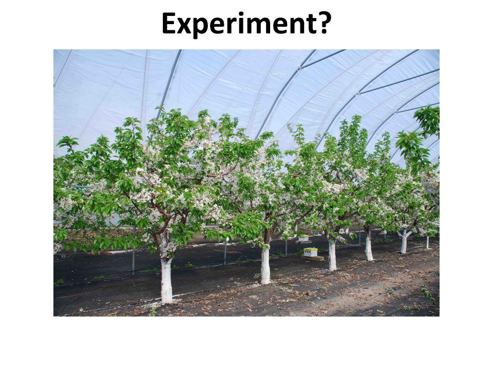 Experiment?