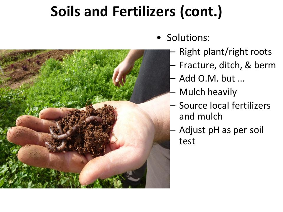 Soils and Fertilizers (cont.) Solutions: –Right plant/right roots –Fracture, ditch, & berm –Add O.M. but … –Mulch heavily –Source local fertilizers an