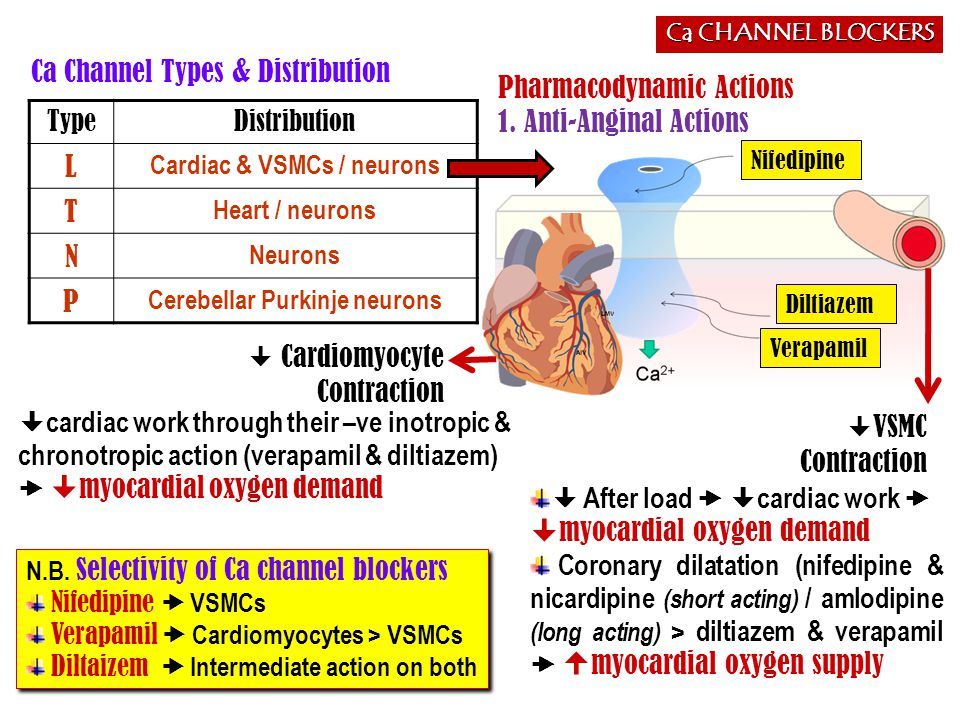 Ca CHANNEL BLOCKERS Indications AS ANTIANGINAL IN STABLE ANGINA; Regular prophylaxis  Long acting dihydropyridines ; amlodipine & SR formulation nifedipine, diltiazem > verapamil Short acting dihydropyridine avoided  BP  symathetic activation  refelx tachycardia +syncope  impair coronary filling  ischemia …..