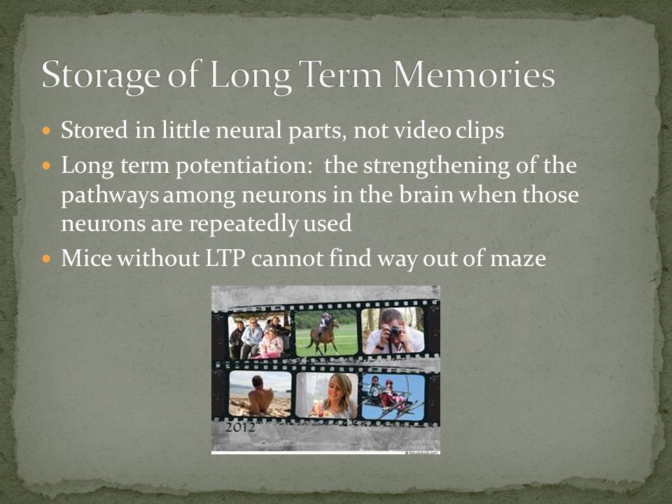 Stored in little neural parts, not video clips Long term potentiation: the strengthening of the pathways among neurons in the brain when those neurons are repeatedly used Mice without LTP cannot find way out of maze