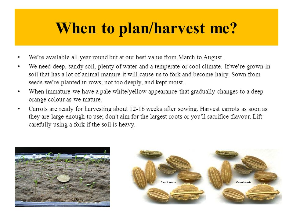When to plan/harvest me. We're available all year round but at our best value from March to August.