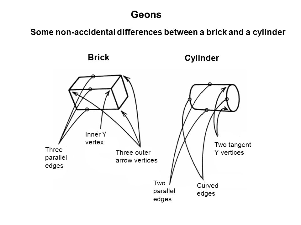 Inner Y vertex Three parallel edges Three outer arrow vertices Two parallel edges Two tangent Y vertices Curved edges Geons Some non-accidental differences between a brick and a cylinder Brick Cylinder