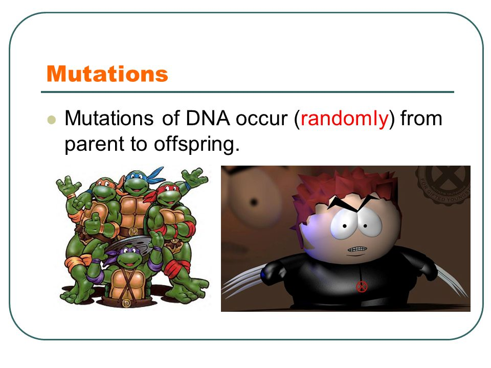 Mutations Mutations of DNA occur (randomly) from parent to offspring.
