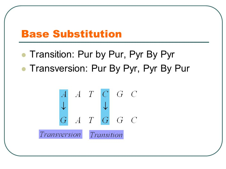 Base Substitution Transition: Pur by Pur, Pyr By Pyr Transversion: Pur By Pyr, Pyr By Pur