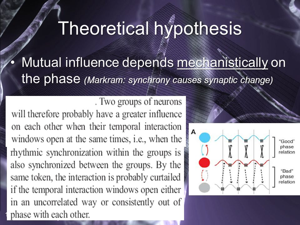 Theoretical hypothesis Mutual influence depends mechanistically on the phase (Markram: synchrony causes synaptic change)Mutual influence depends mechanistically on the phase (Markram: synchrony causes synaptic change) 17
