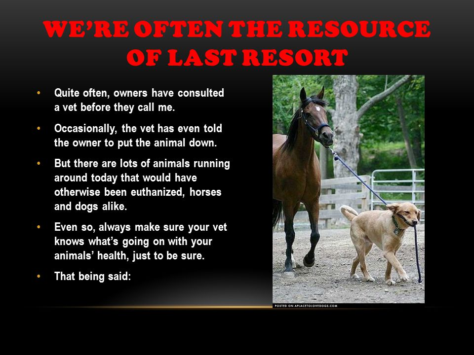 WE'RE OFTEN THE RESOURCE OF LAST RESORT Quite often, owners have consulted a vet before they call me.