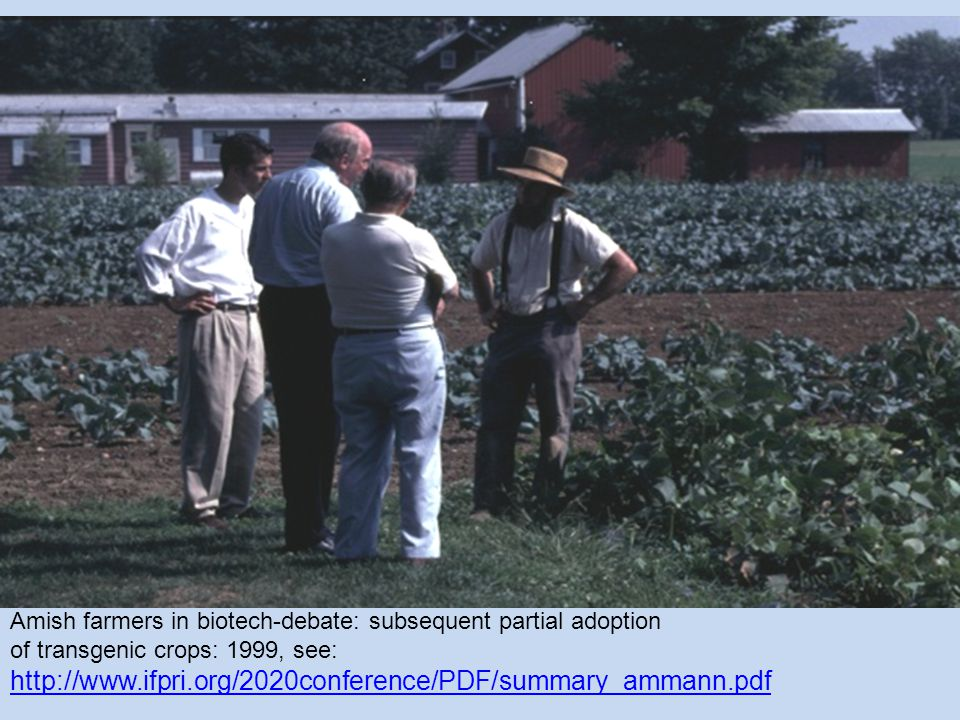Amish farmers in biotech-debate: subsequent partial adoption of transgenic crops: 1999, see: http://www.ifpri.org/2020conference/PDF/summary_ammann.pdf