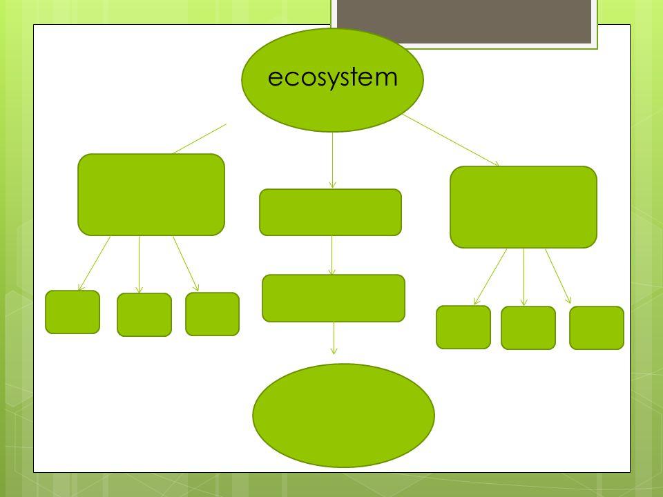 Theme Vocabulary  ecosystem  interdependence  survive