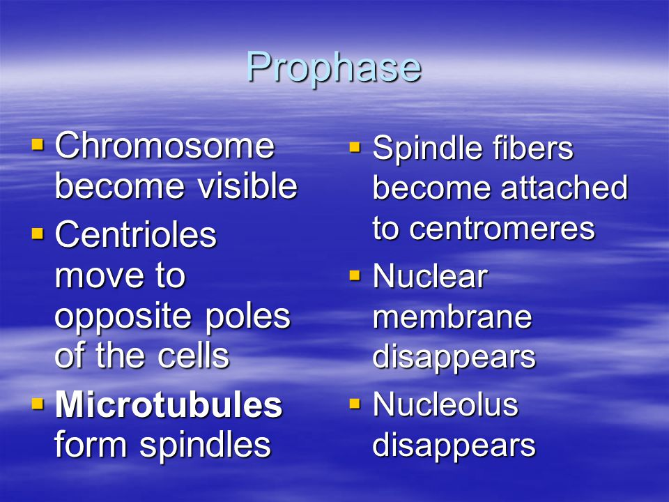 Prophase  Chromosome become visible  Centrioles move to opposite poles of the cells  Microtubules form spindles  Spindle fibers become attached to