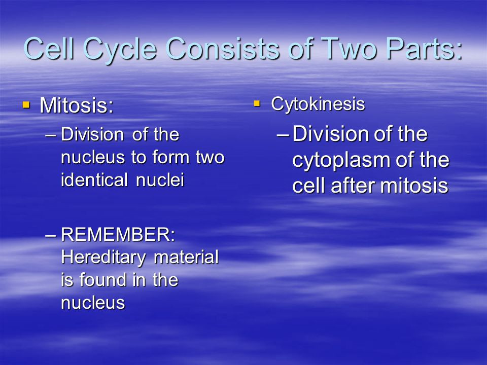 Cell Cycle Consists of Two Parts:  Mitosis: –Division of the nucleus to form two identical nuclei –REMEMBER: Hereditary material is found in the nucl