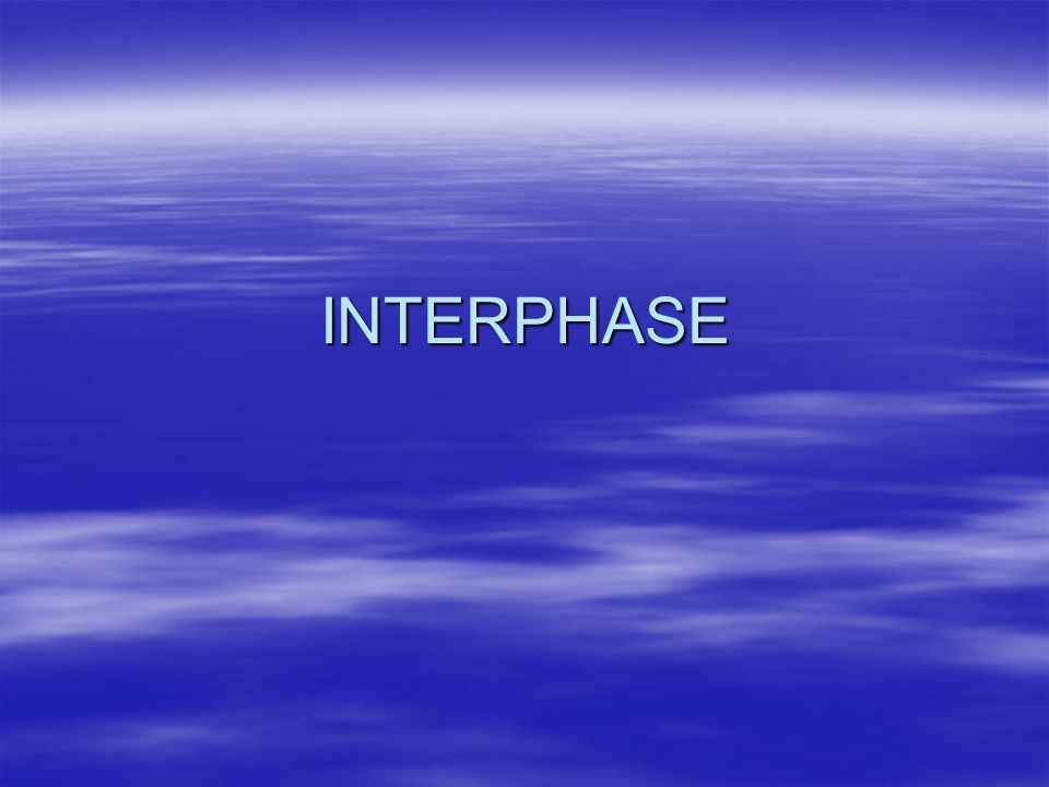 Interphase  Stage when a cell is between mitotic cycles: A.
