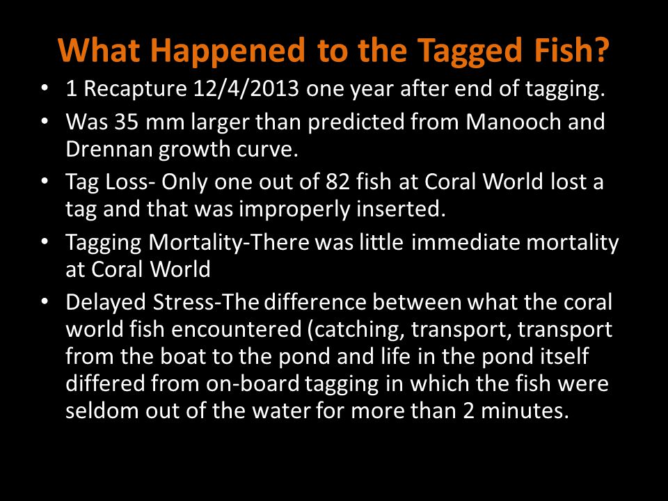 What Happened to the Tagged Fish. 1 Recapture 12/4/2013 one year after end of tagging.