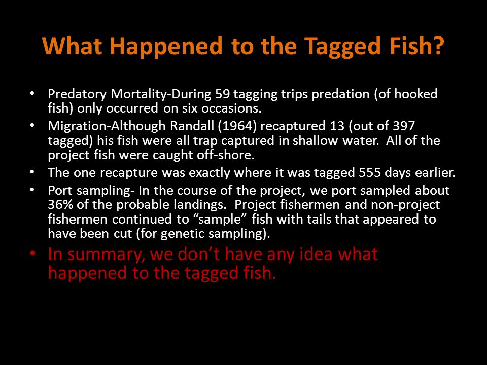 What Happened to the Tagged Fish? Predatory Mortality-During 59 tagging trips predation (of hooked fish) only occurred on six occasions. Migration-Alt