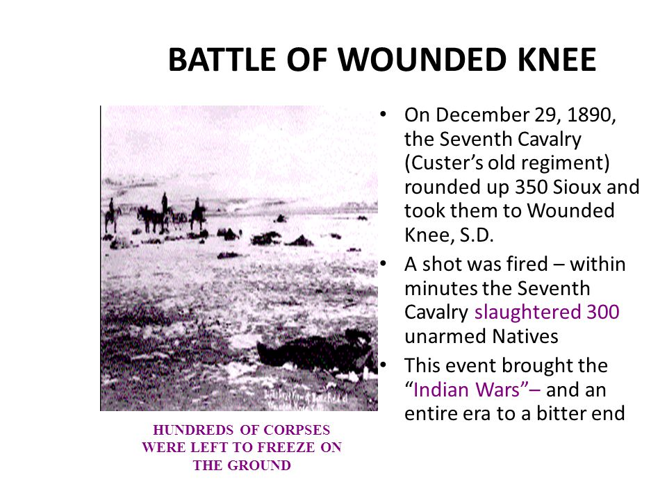 BATTLE OF WOUNDED KNEE On December 29, 1890, the Seventh Cavalry (Custer's old regiment) rounded up 350 Sioux and took them to Wounded Knee, S.D. A sh