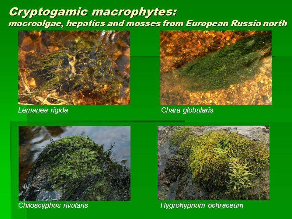 Cryptogamic macrophytes: macroalgae, hepatics and mosses from European Russia north Chiloscyphus rivularisHygrohypnum ochraceum Chara globularis Leman