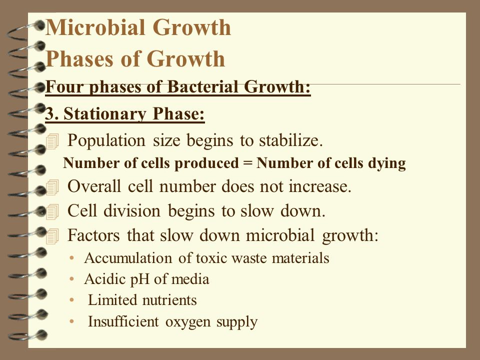 Microbial Growth Phases of Growth Four phases of Bacterial Growth: 3. Stationary Phase: 4 Population size begins to stabilize. Number of cells produce
