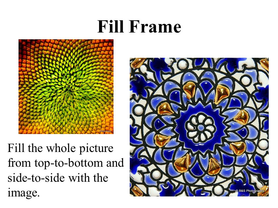 Fill Frame Fill the whole picture from top-to-bottom and side-to-side with the image.